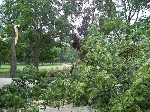 Złamane drzewo w Ogrodzie Krasińskich  Michał /warszawa@tvn.pl
