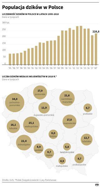 Populacja dzików w Polsce (PAP/Małgorzata Latos)