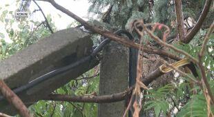 Zniszczenia w Koninie po burzy